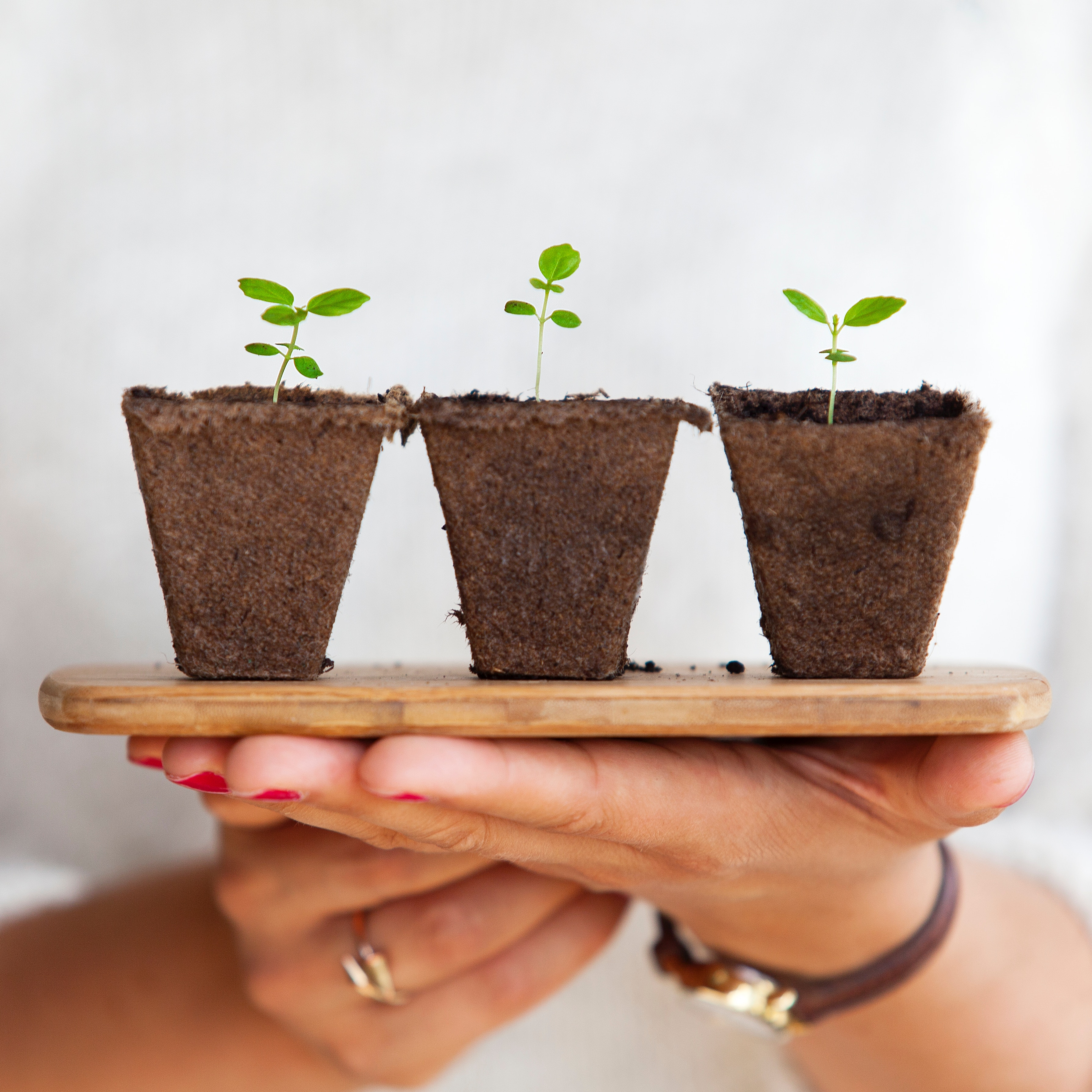 women's hands holding three planters with green plants beginning to sprout