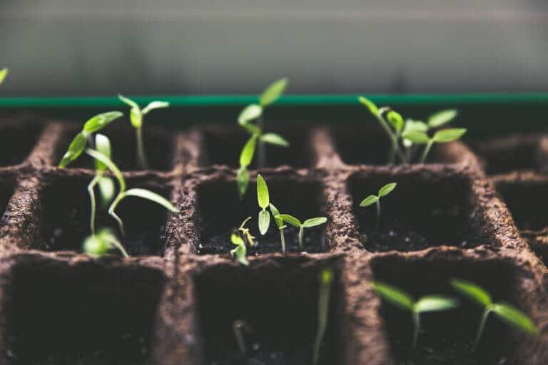 plants sprouting in soil