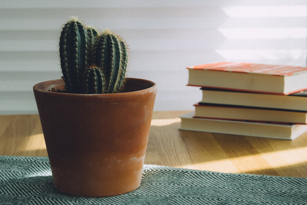 stack-of-books-with-cactus-plant